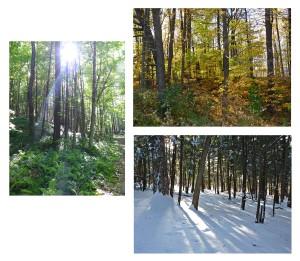 Forests 3 set Volume I