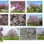 SPRING_TREE_BLOSSOM_SET